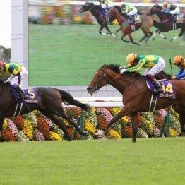 【市川の日曜競馬コラム・有馬記念】