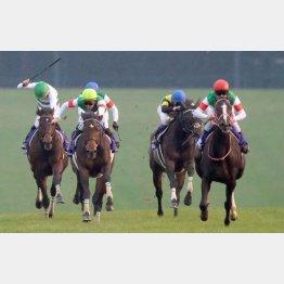 ②着争いは首差でサートゥルナーリア(左から2頭目)が先着