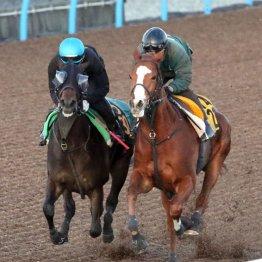 【シンザン記念】ステキな女性に恵まれてきた─ 今週は牝馬で勝負!?