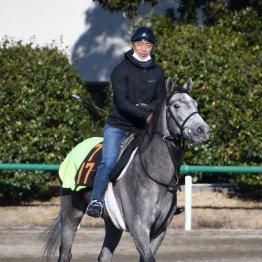 【月曜中山11R・フェアリーS】出走全馬の特選情報