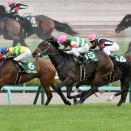 【愛知杯】〝フユコク〟で牝馬の熱い戦い