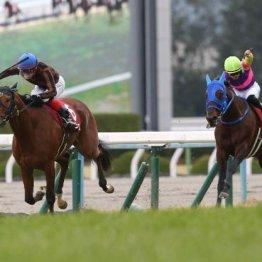 【日経新春杯】52㌔で勝ったモズベッロは別定、定量ではどうか