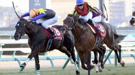 【アメリカJCC】有馬記念馬ブラストワンピースに中山巧者の4歳馬が挑む