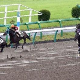 【マリナの日曜競馬コラム・中山4R】