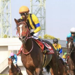 【武田の日曜競馬コラム・アメリカJCC】
