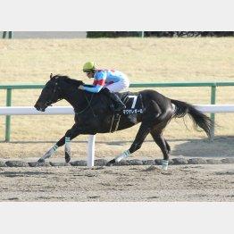 先週の舞鶴S=マグナレガーロは特別、牡馬、その日最後の騎乗だった