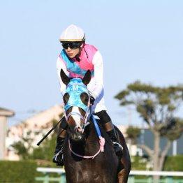 【東京新聞杯】血も後押し 牝馬シャドウディーヴァの出番