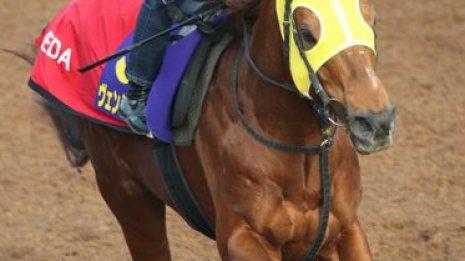 【フェブラリーS】出走馬の特選情報