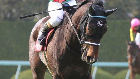 【京都牝馬S】シゲルピンクダイヤが今度こそ初タイトル獲得だ