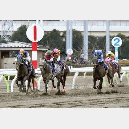 モジアナフレイバーは東京大賞典で③着(右から2頭目)/