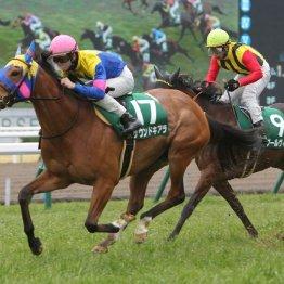 【京都牝馬S】京都巧者サウンドキアラが京都金杯に続いて重賞2連勝