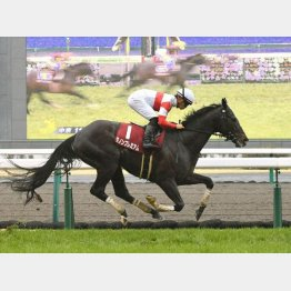 昨年の勝ち馬はダノンプレミアム