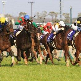 【高松宮記念】牝馬は6頭が圏内入り