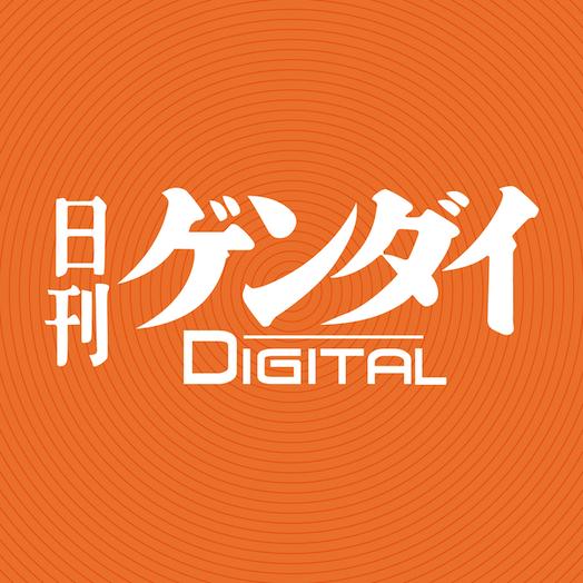 【レスキュー隊の日曜競馬コラム・中山12R】