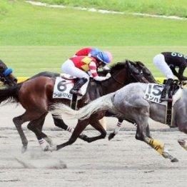【飯島の土曜競馬コラム・中山12R】
