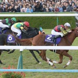 【亀井の日曜競馬コラム・大阪杯】