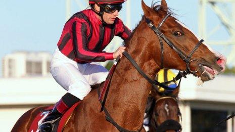 【ニュージーランドT】実績馬に連勝馬