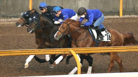 【鳴尾記念】過去8年で5勝の池江厩舎が送る超良血馬サトノルークス
