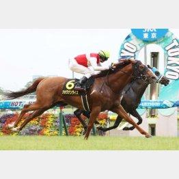 昨年の勝ち馬ショウナンライズも参戦
