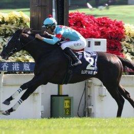 【飯島の日曜競馬コラム・宝塚記念】