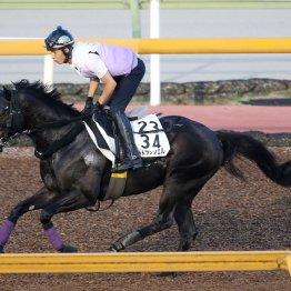 【CBC賞】出走馬の特選情報