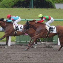【武田の土曜競馬コラム・安達太良S】