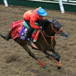 【中京記念】出走馬の特選情報
