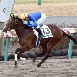 【レスキュー隊の日曜競馬コラム・福島12R】