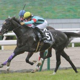 【レスキュー隊の日曜競馬コラム・札幌12R】