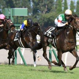 【関越S】ザダル上がり32秒8で3馬身突き抜ける