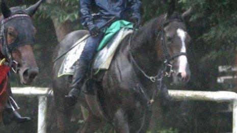 【レパードS】出走馬の特選情報