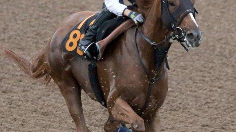 【レパードS】牝馬ブランクチェック戦闘モードへ