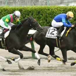 【レパードS】前走左回りの先行馬が穴 Fウィングス重賞突破
