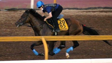 【小倉記念】関東馬ロードクエスト驚愕の7F95秒0を馬なり