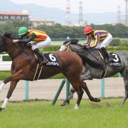 【藤岡の土曜競馬コラム・西部日刊スポーツ杯】