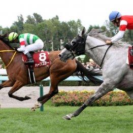 【札幌記念】牝馬が重賞戦線で大活躍