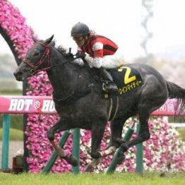 【大谷の土曜競馬コラム・紫苑S】