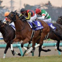 【新居の土曜競馬コラム・レインボーS】