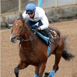 【新居の月曜競馬コラム・セントライト記念】