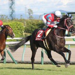 【神戸新聞杯】コントレイルが持ったままの完勝で菊花賞へ王手