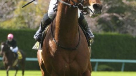 【ポートアイランドS】重賞勝ち馬から上がり馬まで
