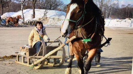 〈番外編〉魅力たっぷり ばんえい競馬(3)