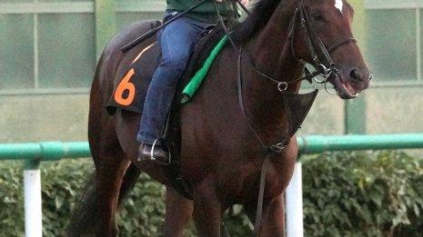 【亀井の土曜競馬コラム・サウジアラビアロイヤルC】