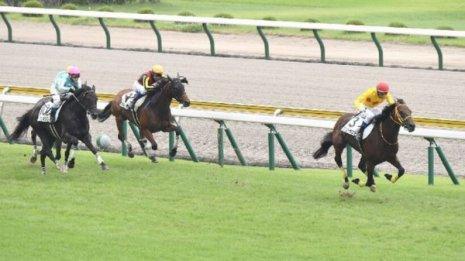 【マリナの日曜競馬コラム・新潟4R】