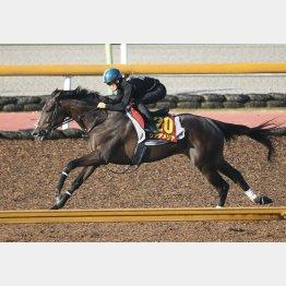 馬体をすっきりと見せるリアアメリア