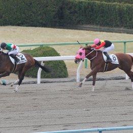 【レスキュー隊の日曜競馬コラム・京都12R】