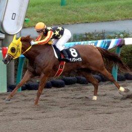 【播磨の土曜競馬コラム・室町S】