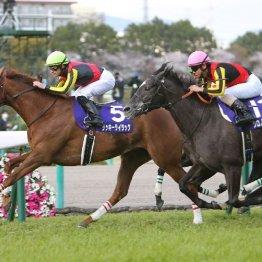 【天皇賞・秋】今年のGⅠ戦線は牝馬が大活躍