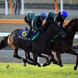 【藤岡の日曜競馬コラム・マイルチャンピオンシップ】