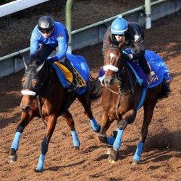 【ジャパンC】出走馬の特選情報